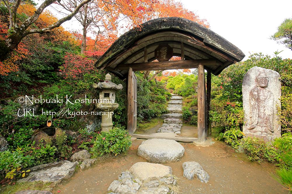 庭園の中門。屋根の曲線や配置された石燈籠、樹木のバランスが素晴らしいです。