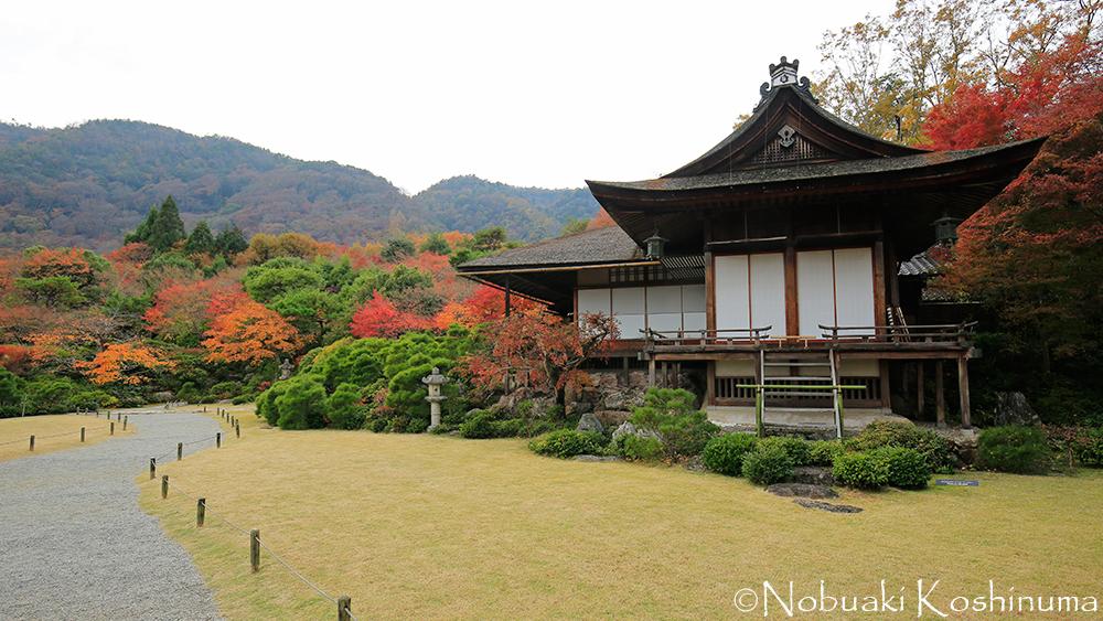 大乗閣。嵐山を背景にした贅沢な借景。休憩スペースもあり、ベンチに座って景色を楽しめます!
