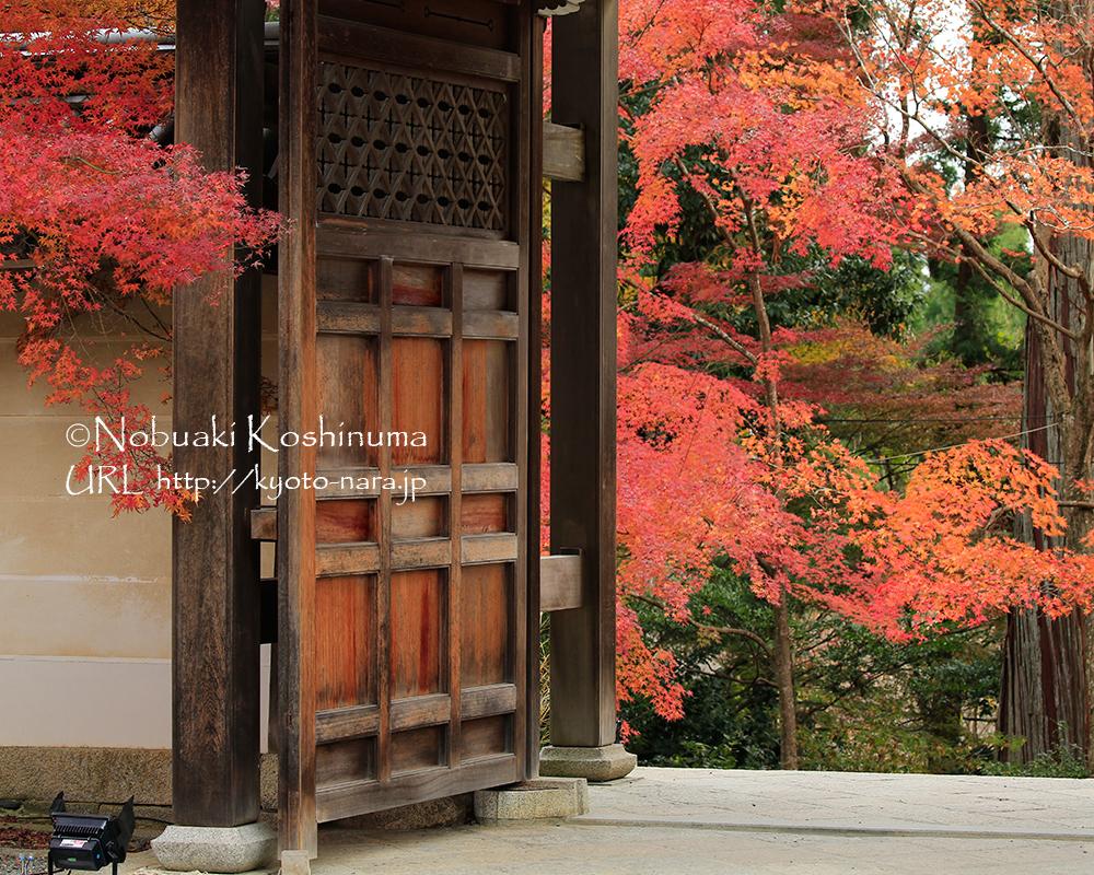 勅使門。格式高い特別な門ですが、今では参拝者であればどなたでも通ることができます。