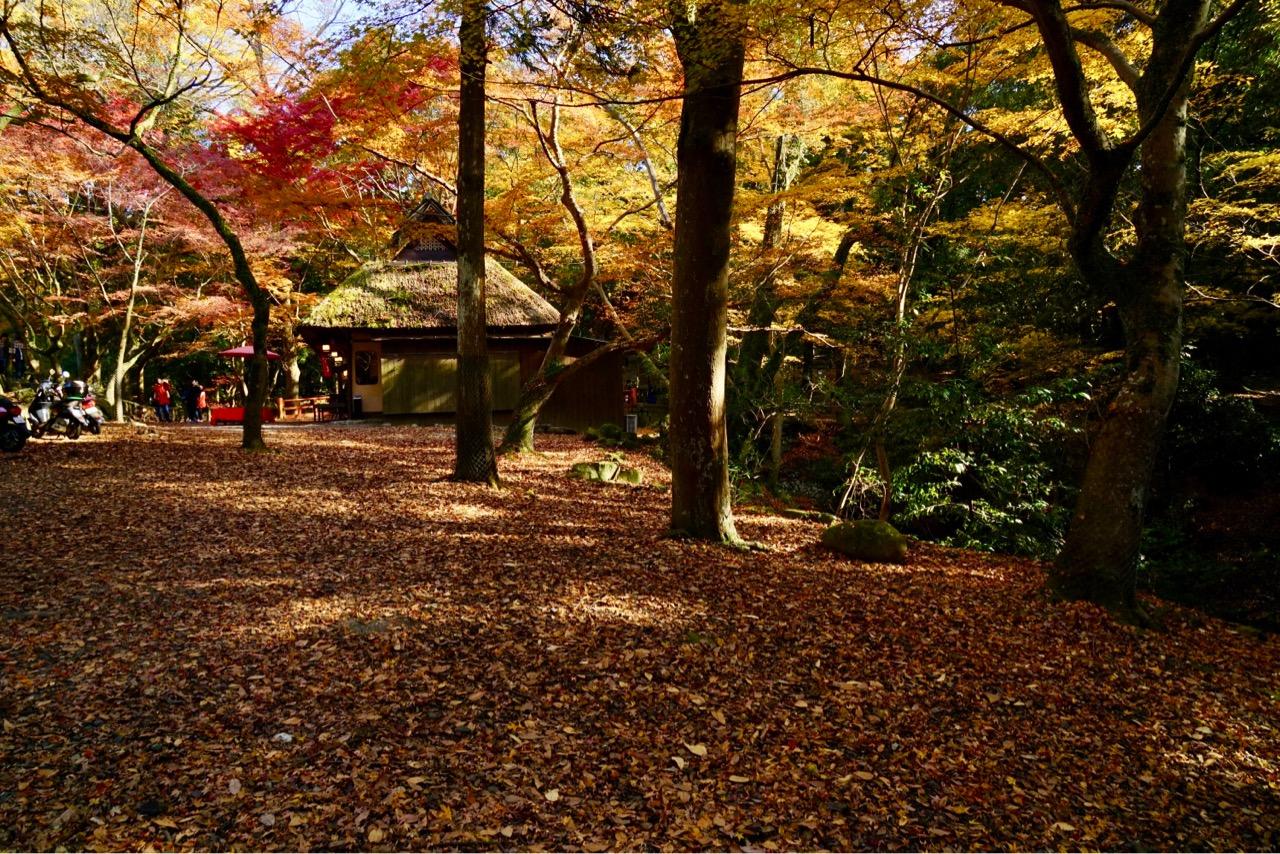 奈良公園にある茶屋の周りに紅葉が敷き詰められてました。とても綺麗でした!
