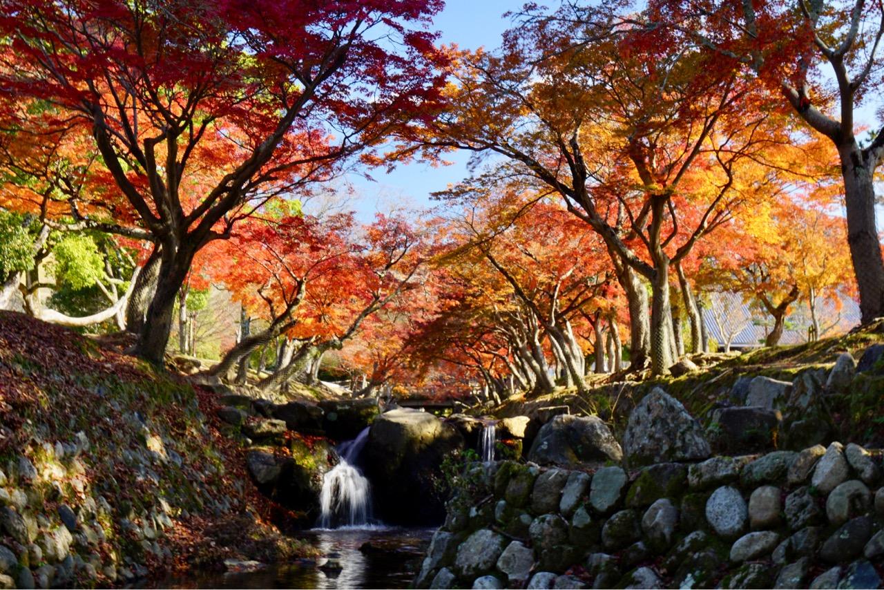 奈良公園 一帯が赤く燃えるように美しく感動しました。