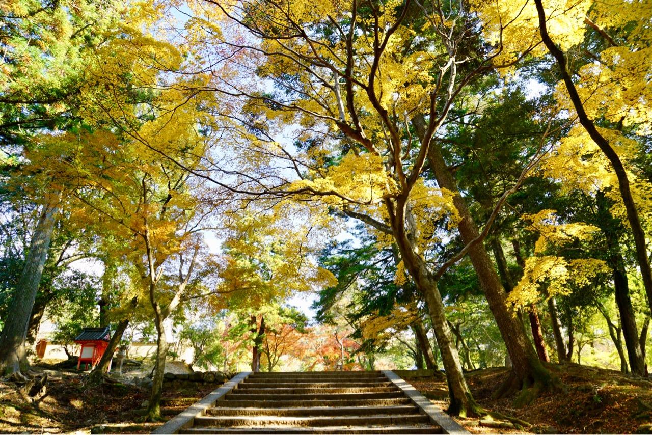 手向山八幡宮 紅葉の名所として知られていてとても綺麗でした。