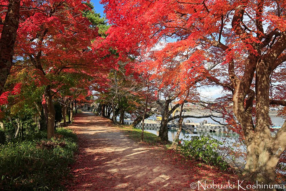 平等院を出てすぐの宇治川沿い。紅葉が見事でした。