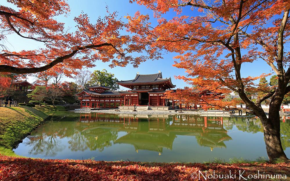 浄土式庭園と鳳凰堂。紅葉が青空に映え、見事でした!