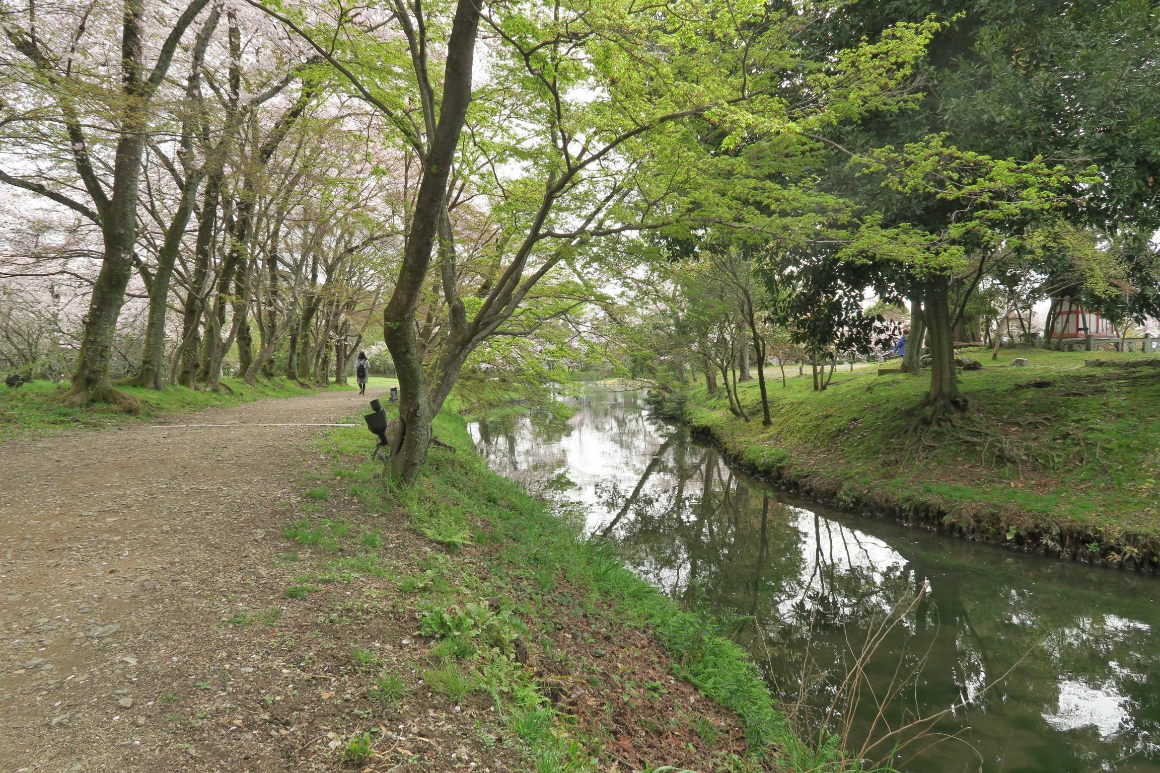 桜と新緑に囲まれ、雰囲気の良い道でした。
