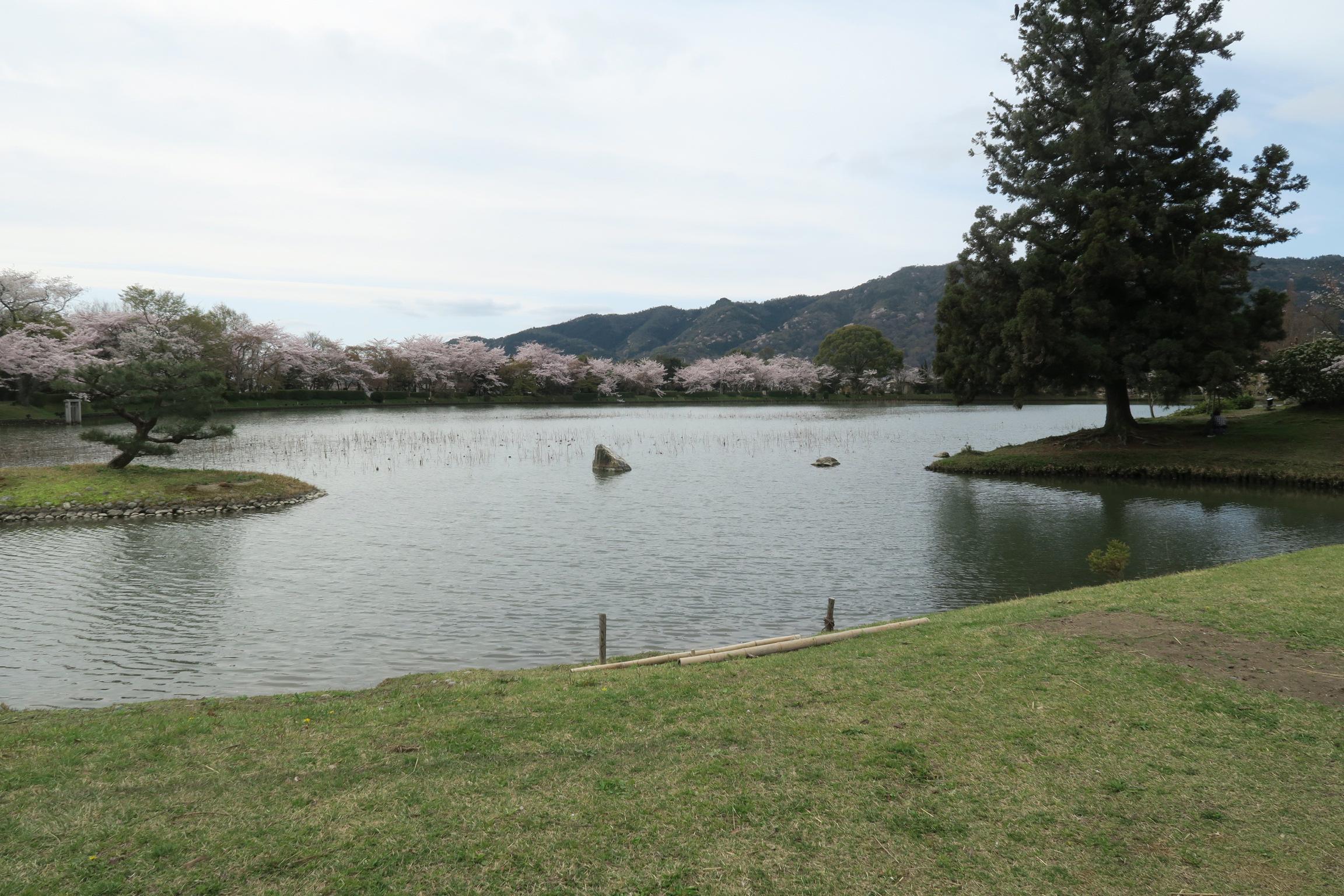 大きな池ですね。1周20~30分ほどで歩けます。