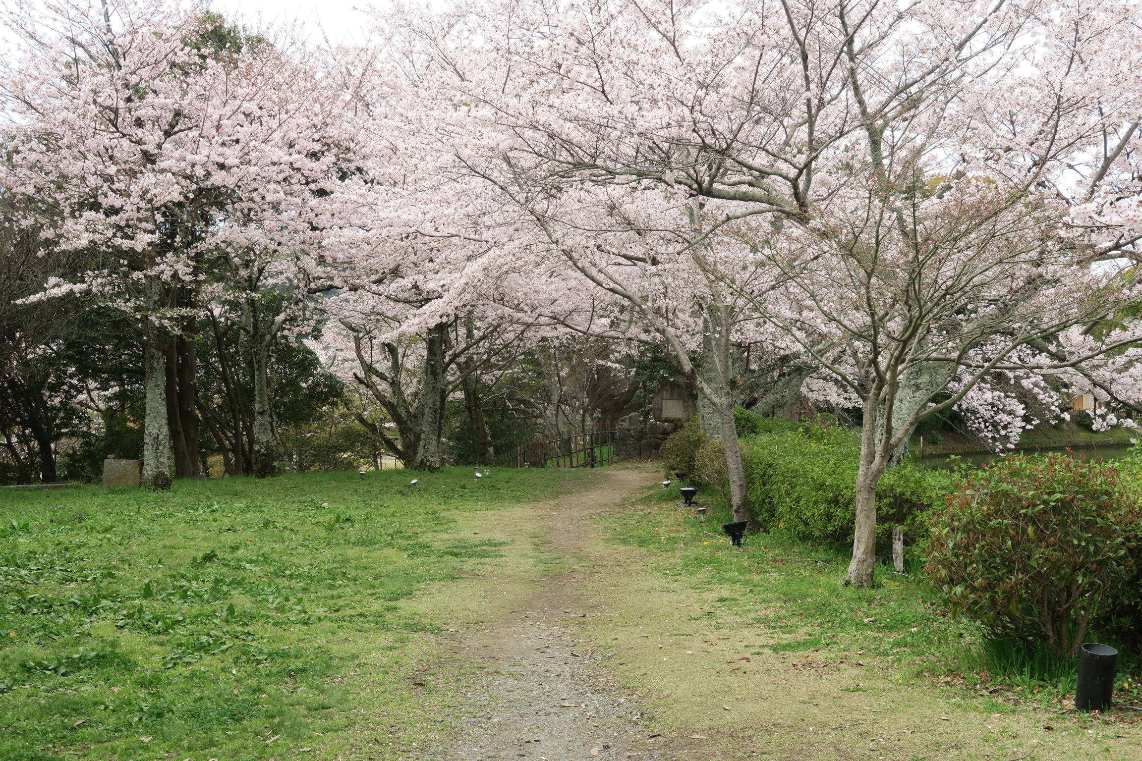 桜も満開で、ちょうどいい時に訪れることができました。