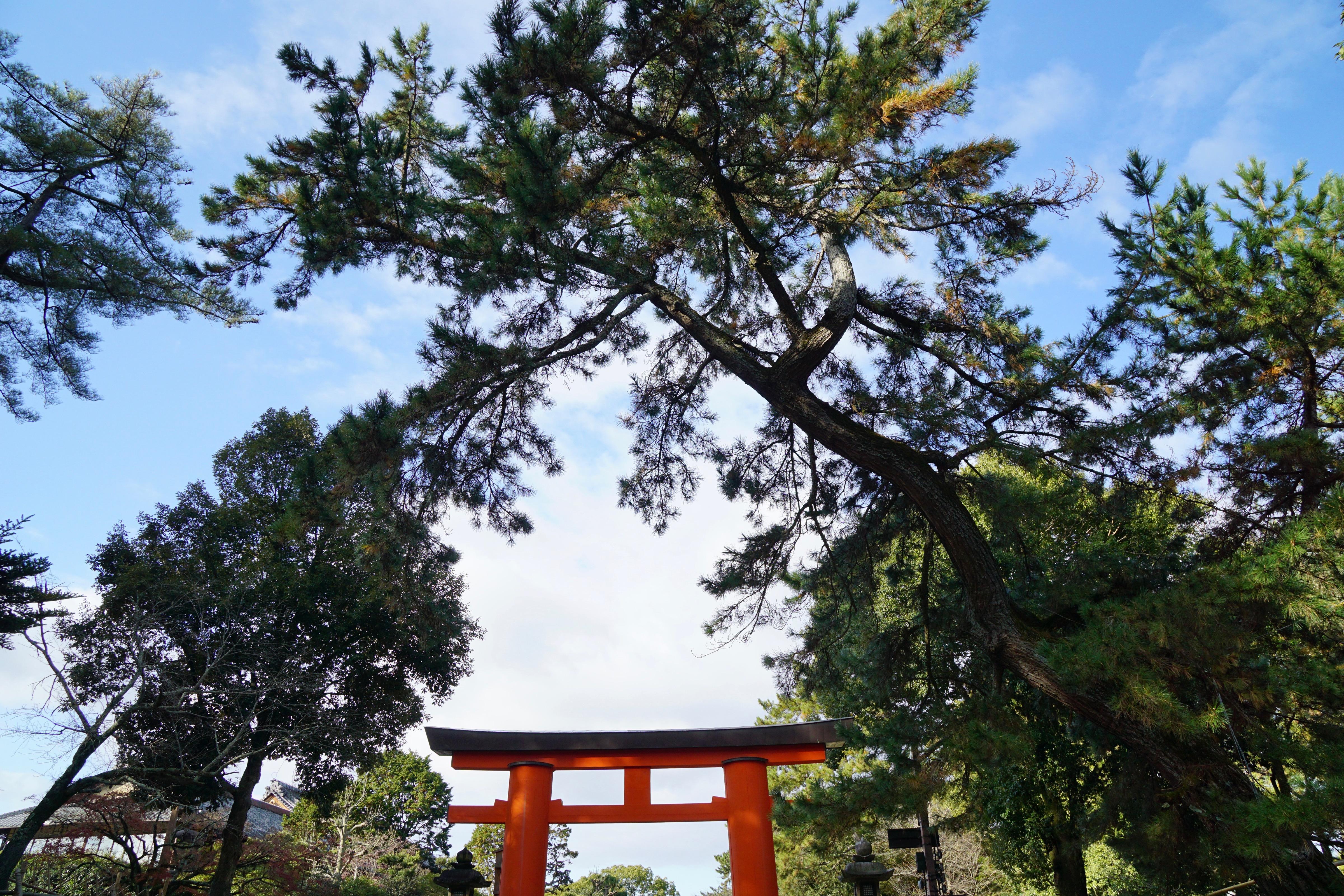 春日大社参道の南側「飛火野」で行われます。