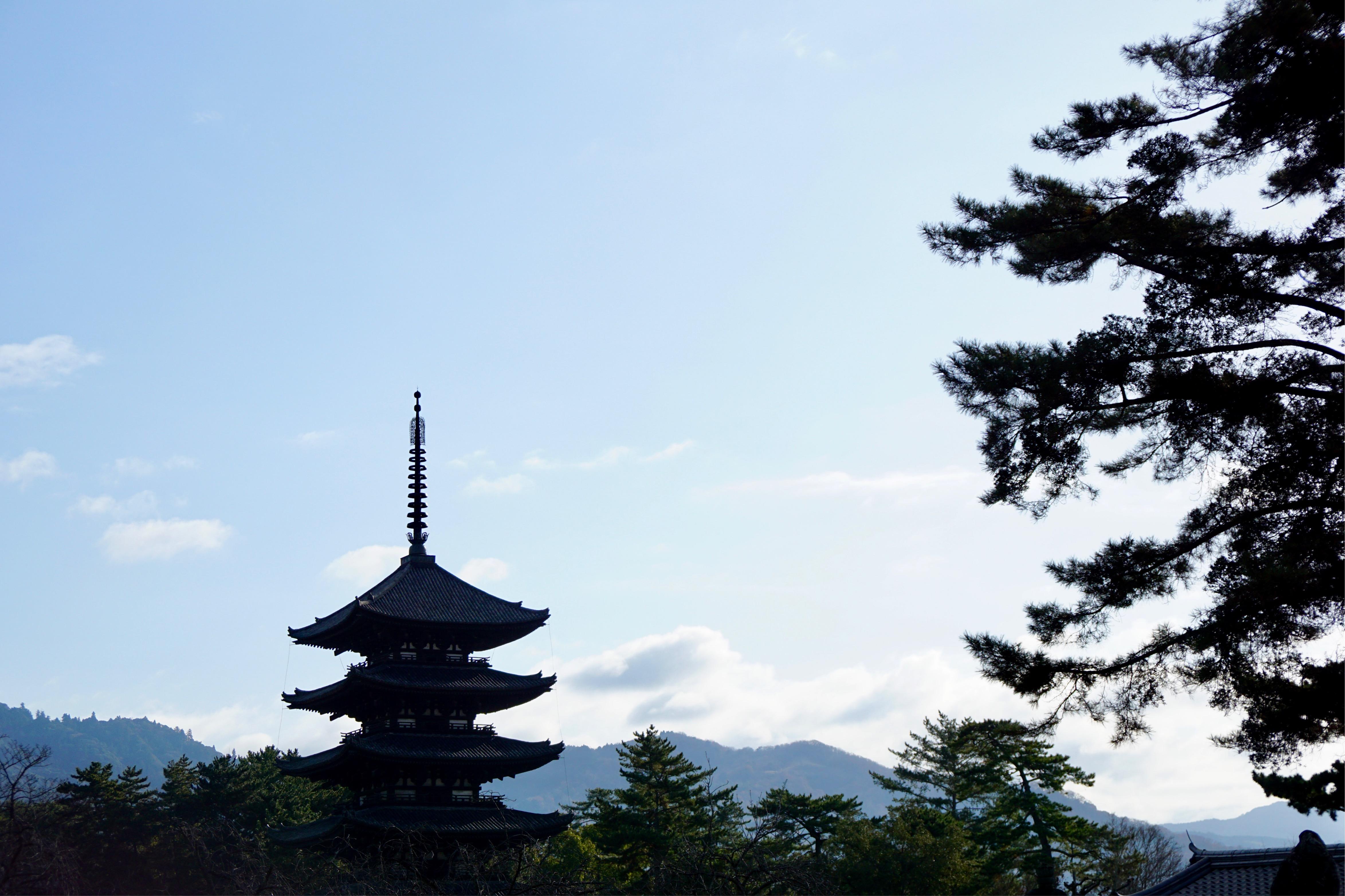 興福寺の五重塔もすっかり冬景色です。