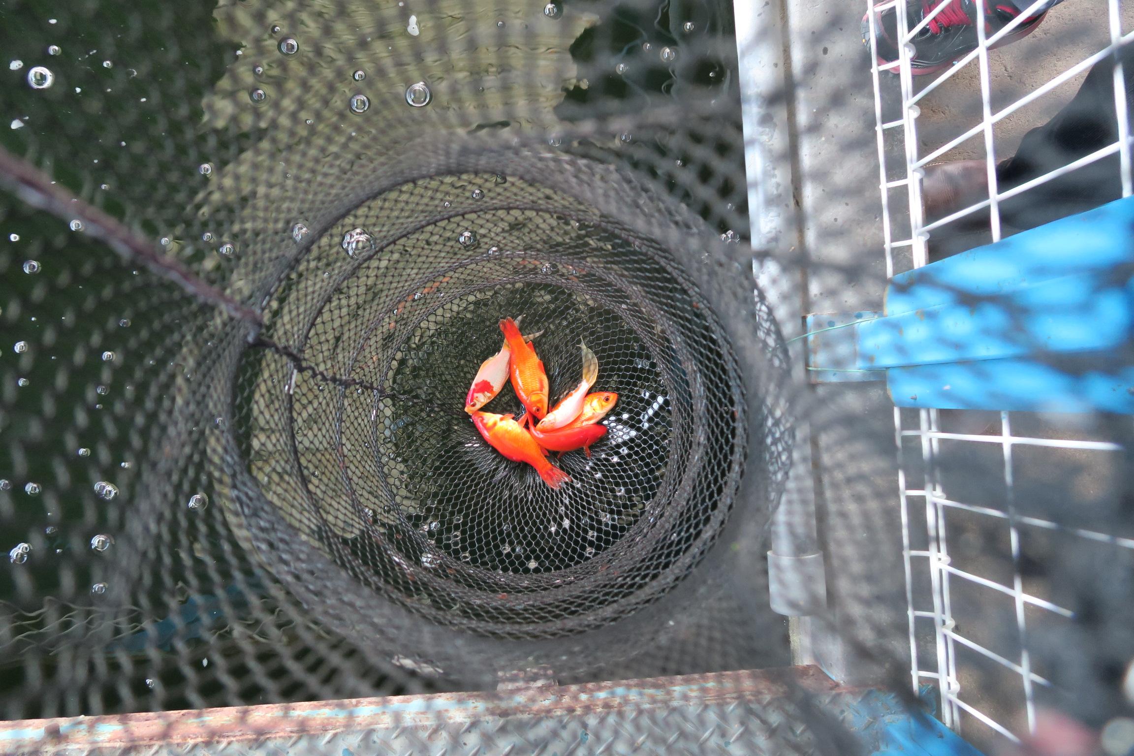 寒い季節は難しいと言われましたが、全部で6匹釣れました!次は鯛を釣りにいくぞー!!