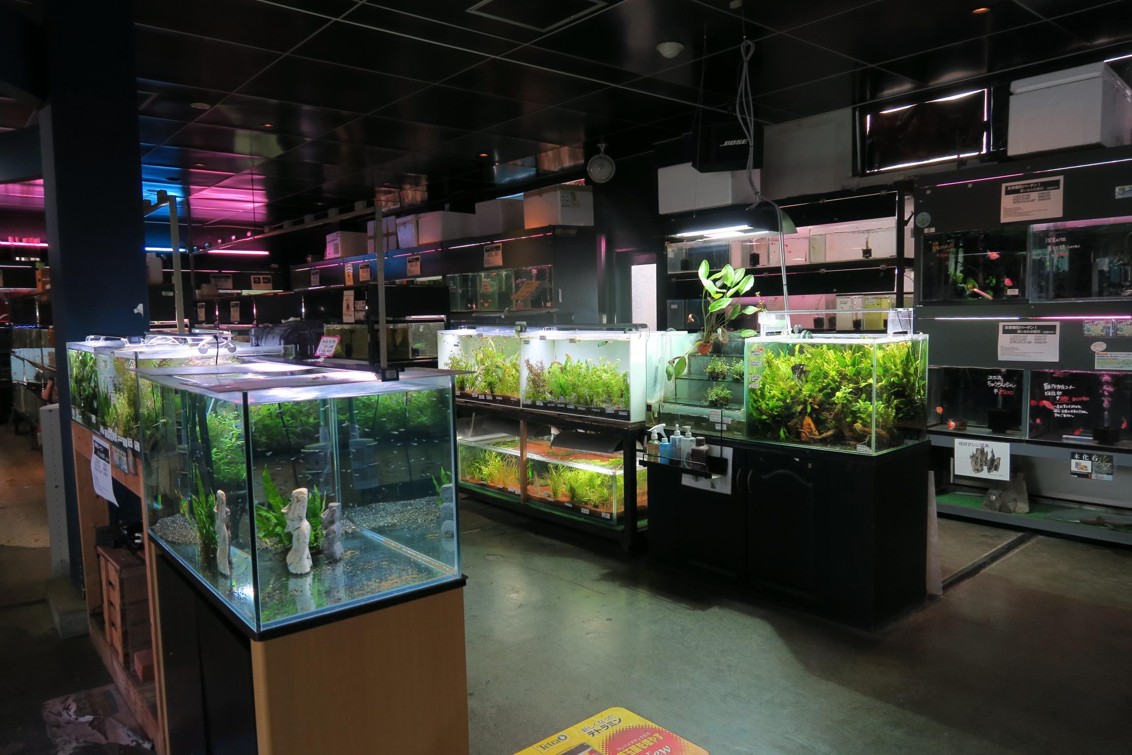 店内には熱帯魚がたくさん!
