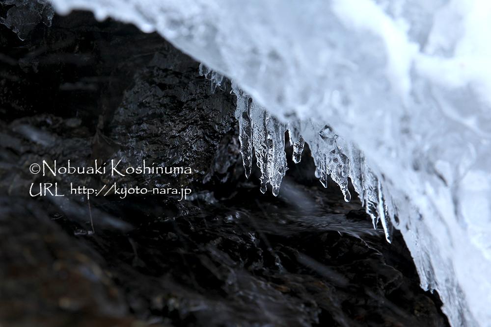 岩肌にできたツララもキラキラと輝いています。