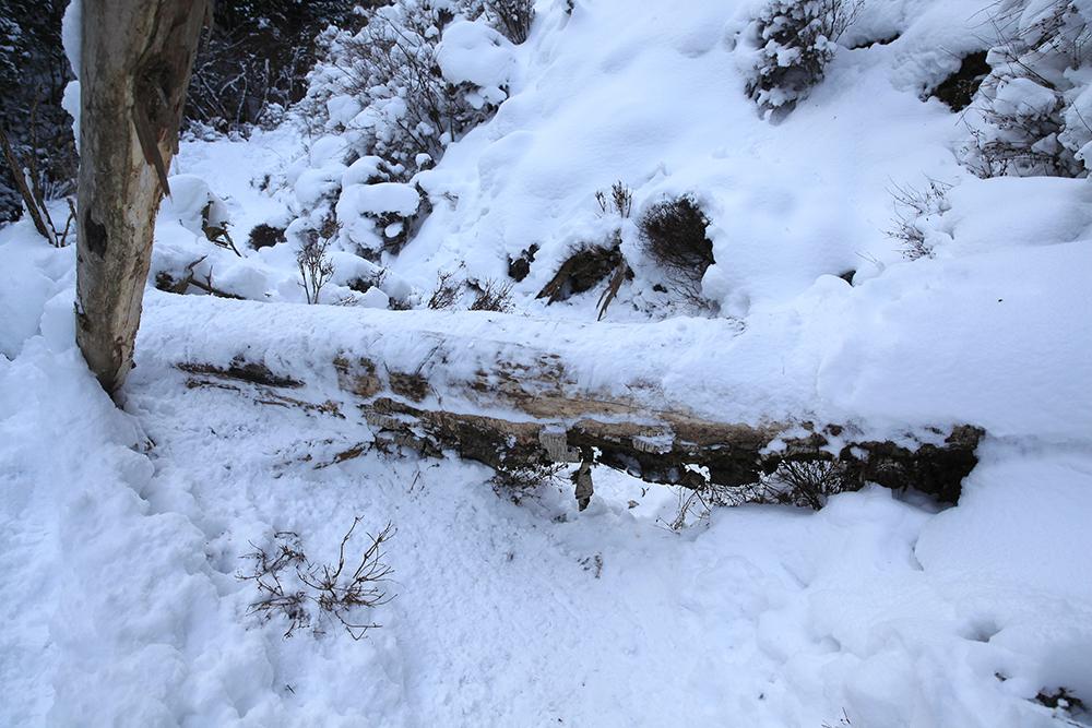 倒木を乗り越えます。疲れているときは乗り越える際、足をひねりやすいので注意が必要です。