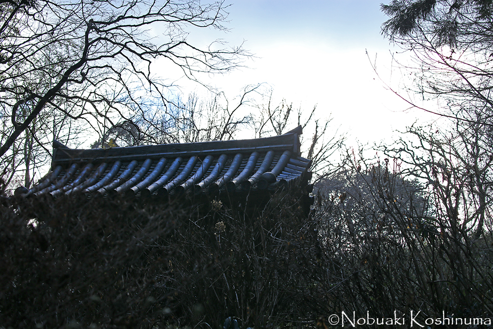樹木の葉も落ち、ひらけた東の空。陽はここから三重塔を照らします。