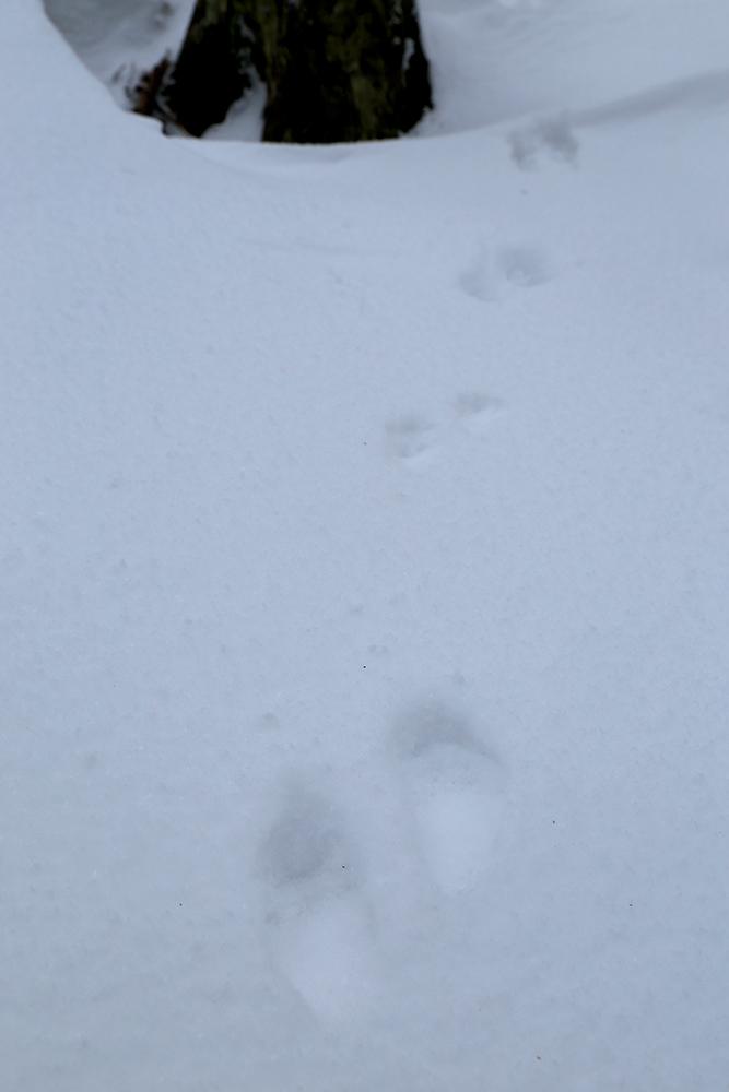 小動物の足跡。