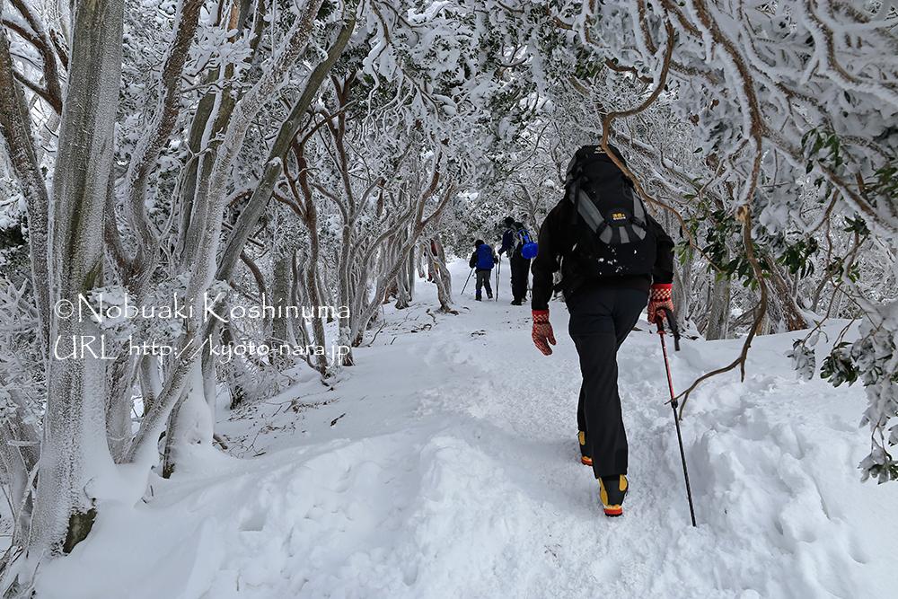 山頂も近くなり、続々と登山者に抜かれました。子供にも(苦笑)