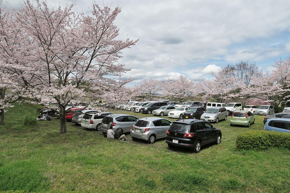 お昼過ぎに葛城山麓公園に到着しましたが、すでに駐車場は満車。すごい人気ですね。