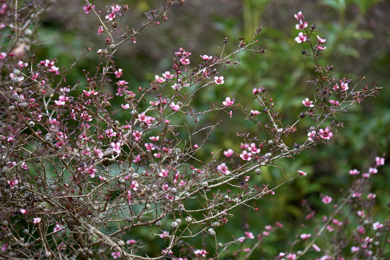 可愛らしい小花も。