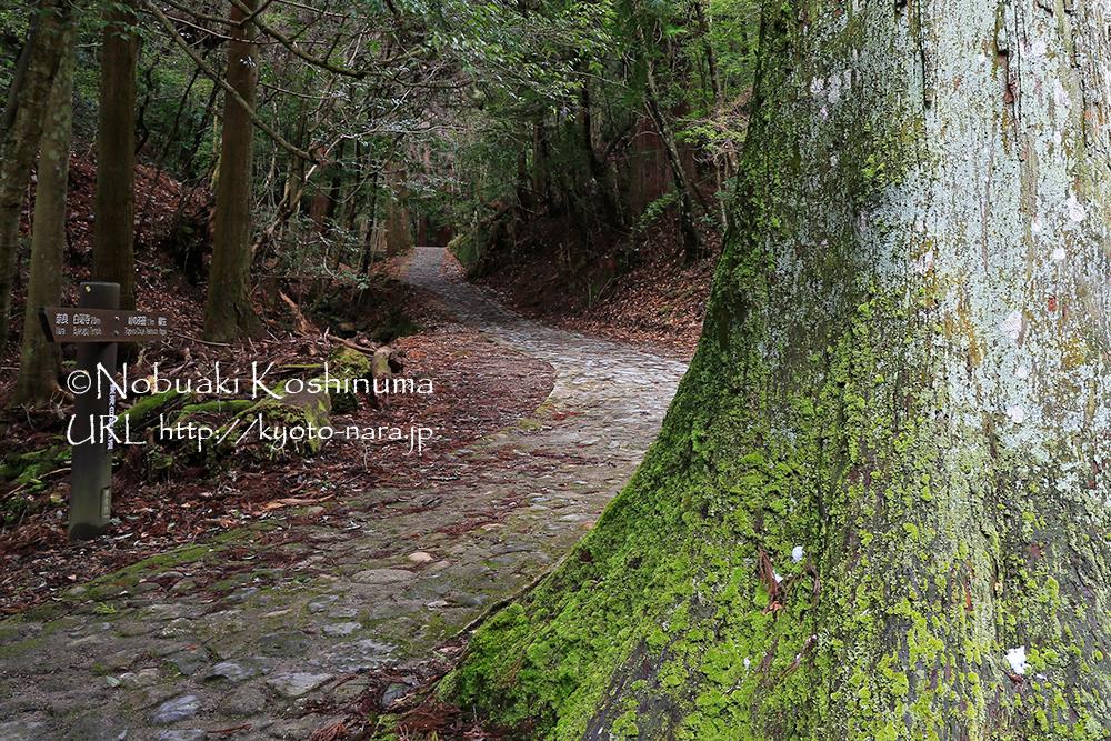 趣きのある石畳の道。