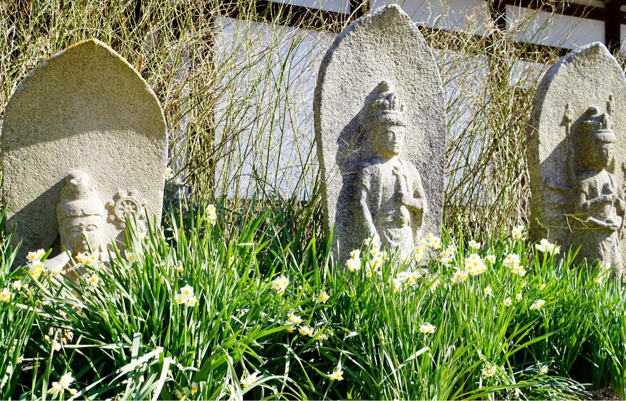 春を告げる花は蝋梅にしても水仙にしても黄色が多いですね。