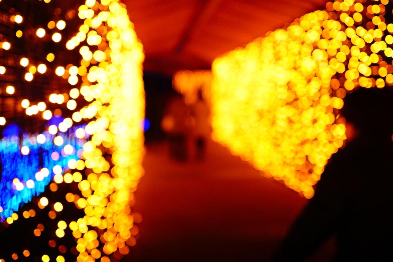 赤い灯りは寒い奈良公園の中でも癒される場所です。
