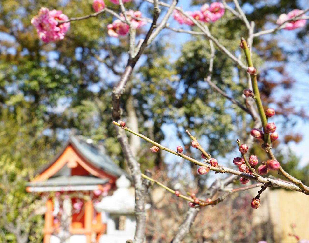 梅の花と境内がとても絵になります。