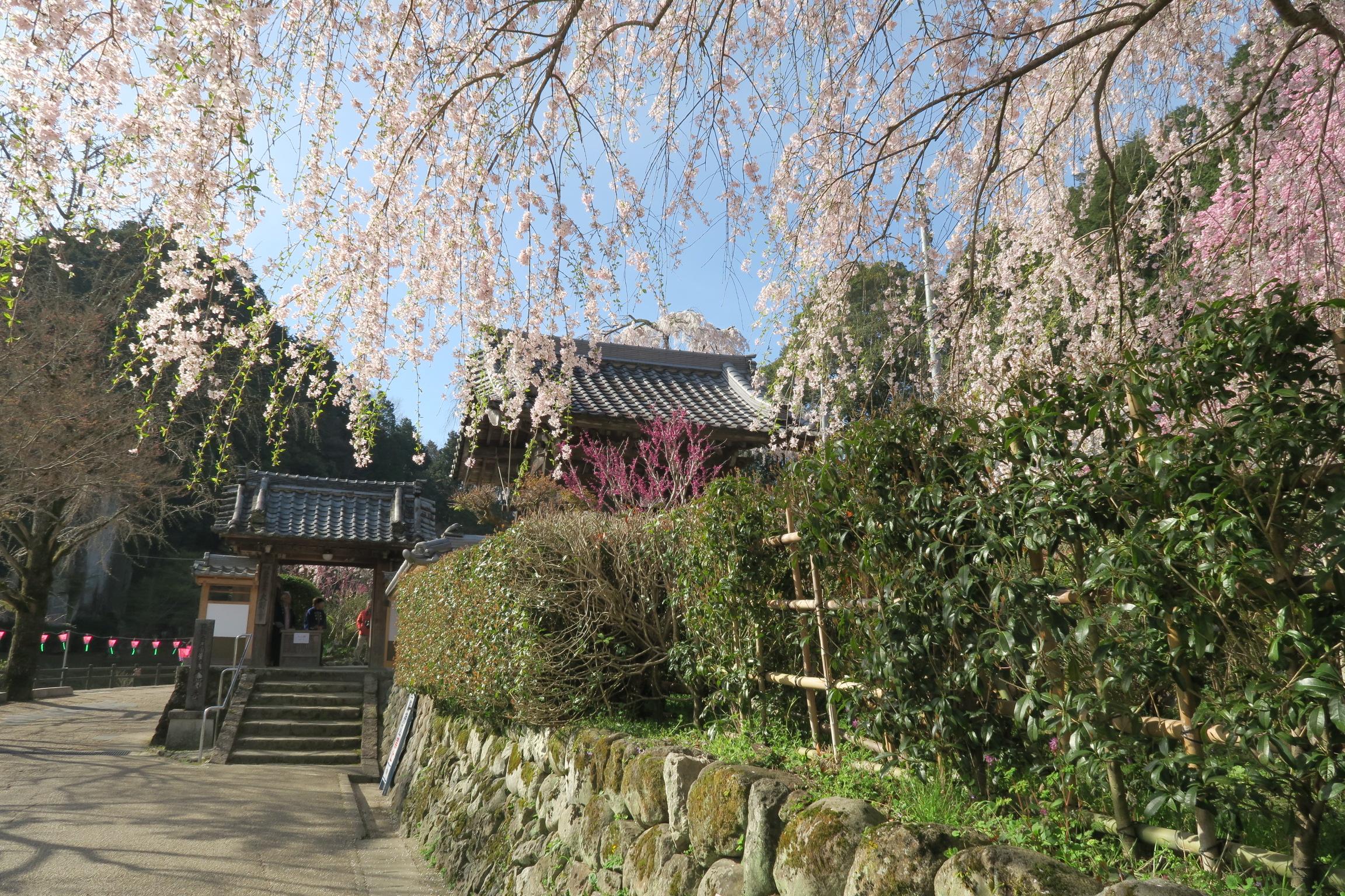 桜の季節はガスのかかったような天気が多い中で、青空が拡がりきれいな桜が楽しめました。