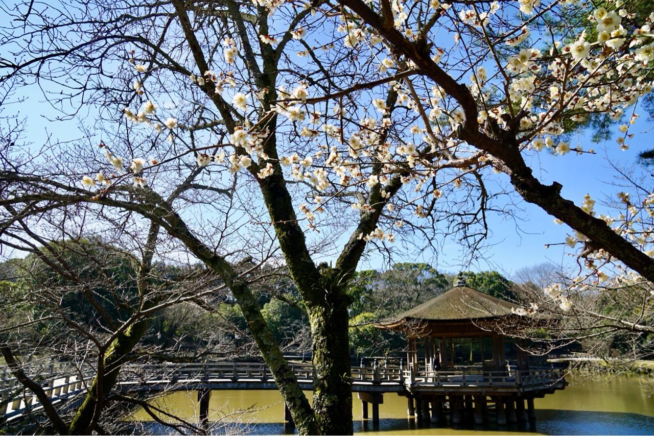 梅の花と浮御堂