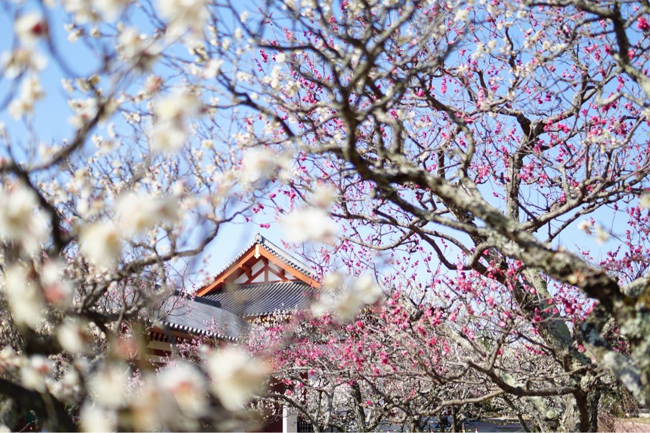 満開で色とりどり咲き乱れとても綺麗でした。