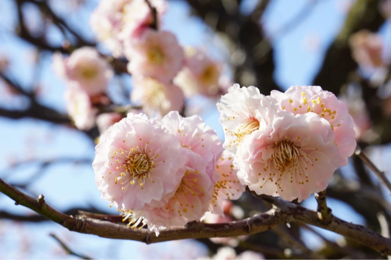 花びらが多くて可愛いですね。