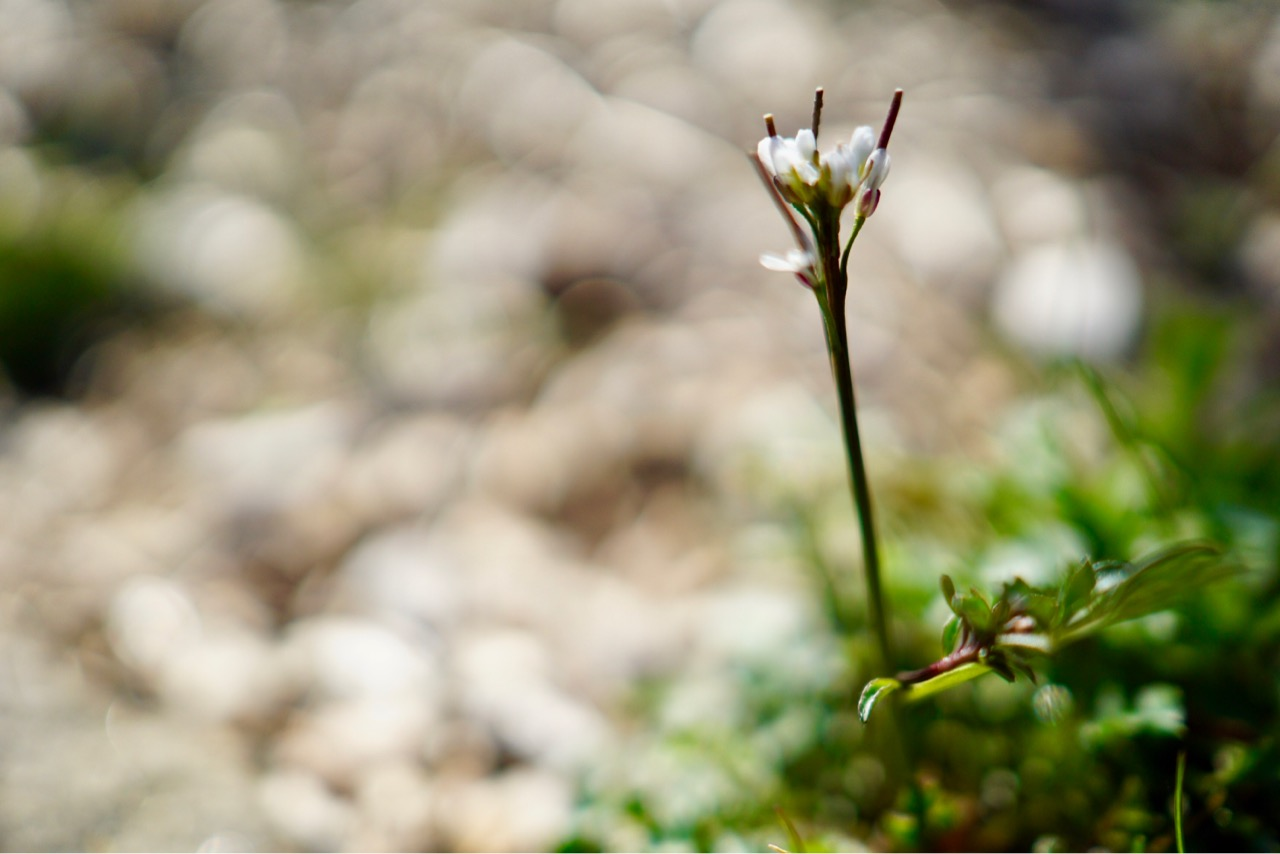 小さいお花もたくさん咲き始めています。