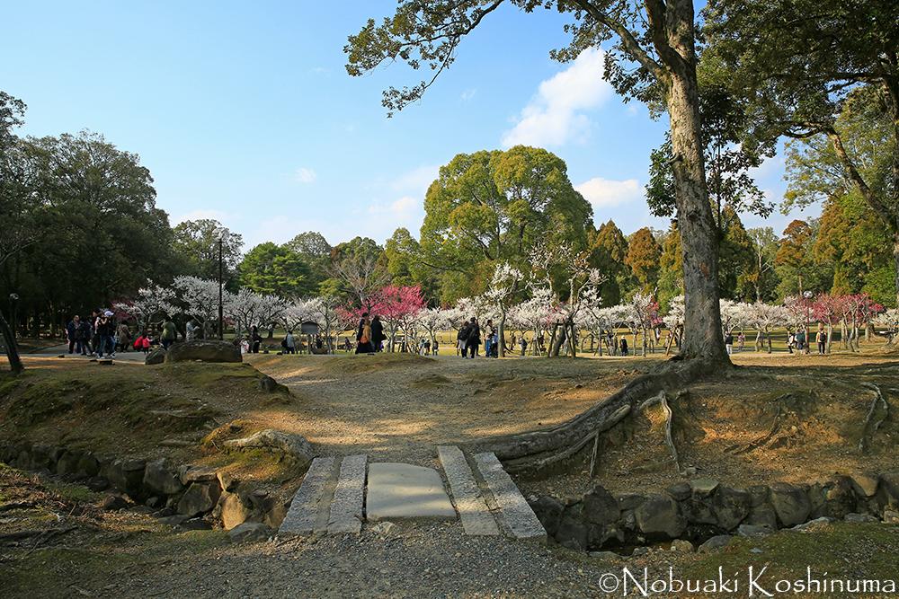 奈良・片岡梅林。梅が満開でした!天気もよく多くの人が訪れていました。