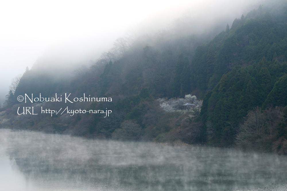 月ヶ瀬橋にて撮影。蒸発霧の発生した名張川もいいですね。