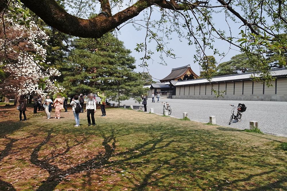京都御苑の敷地は広くて、車も関係車両のみなので、お子さま連れでも安心して楽しめます。
