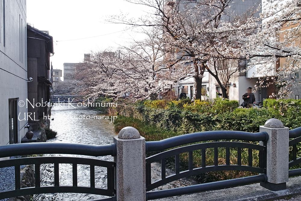 街のあちこちに桜の花が咲き、散策もたのしいですね。