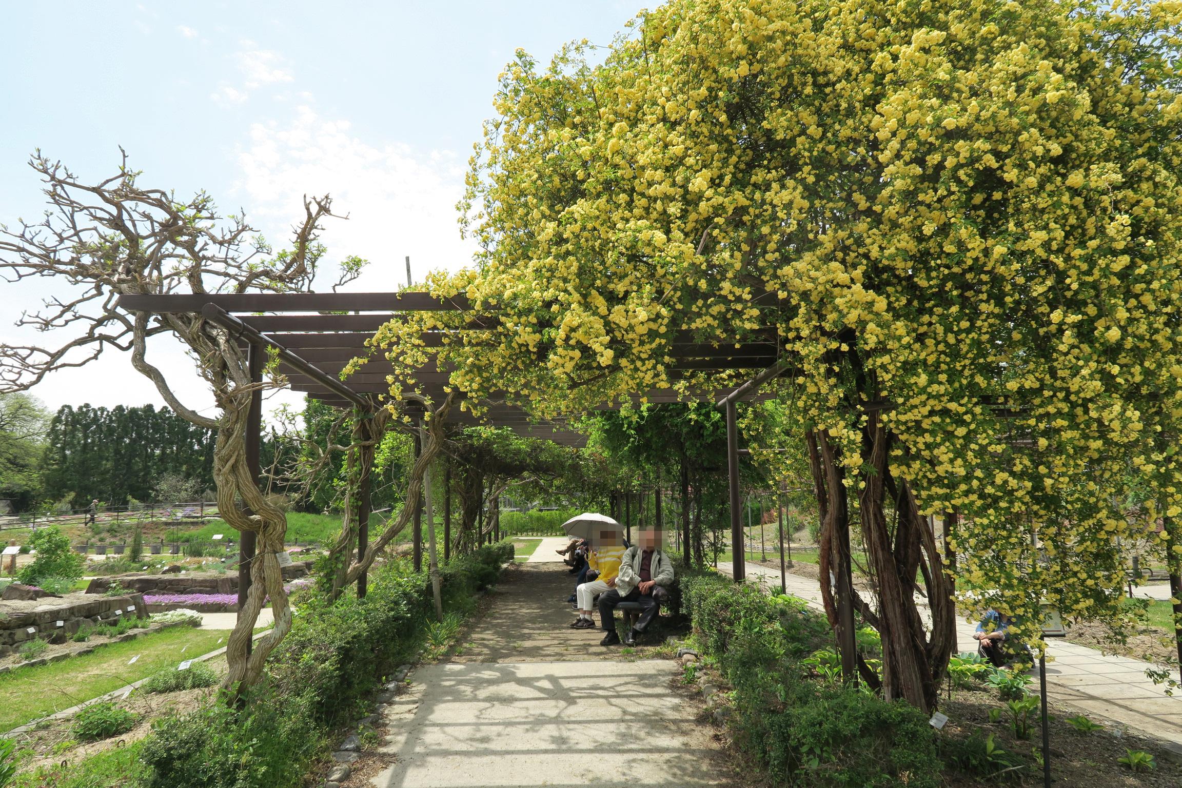 右側の黄色い花はモッコウバラというそうですが、木陰のベンチに座りながら眺めるのも良さそう。。。