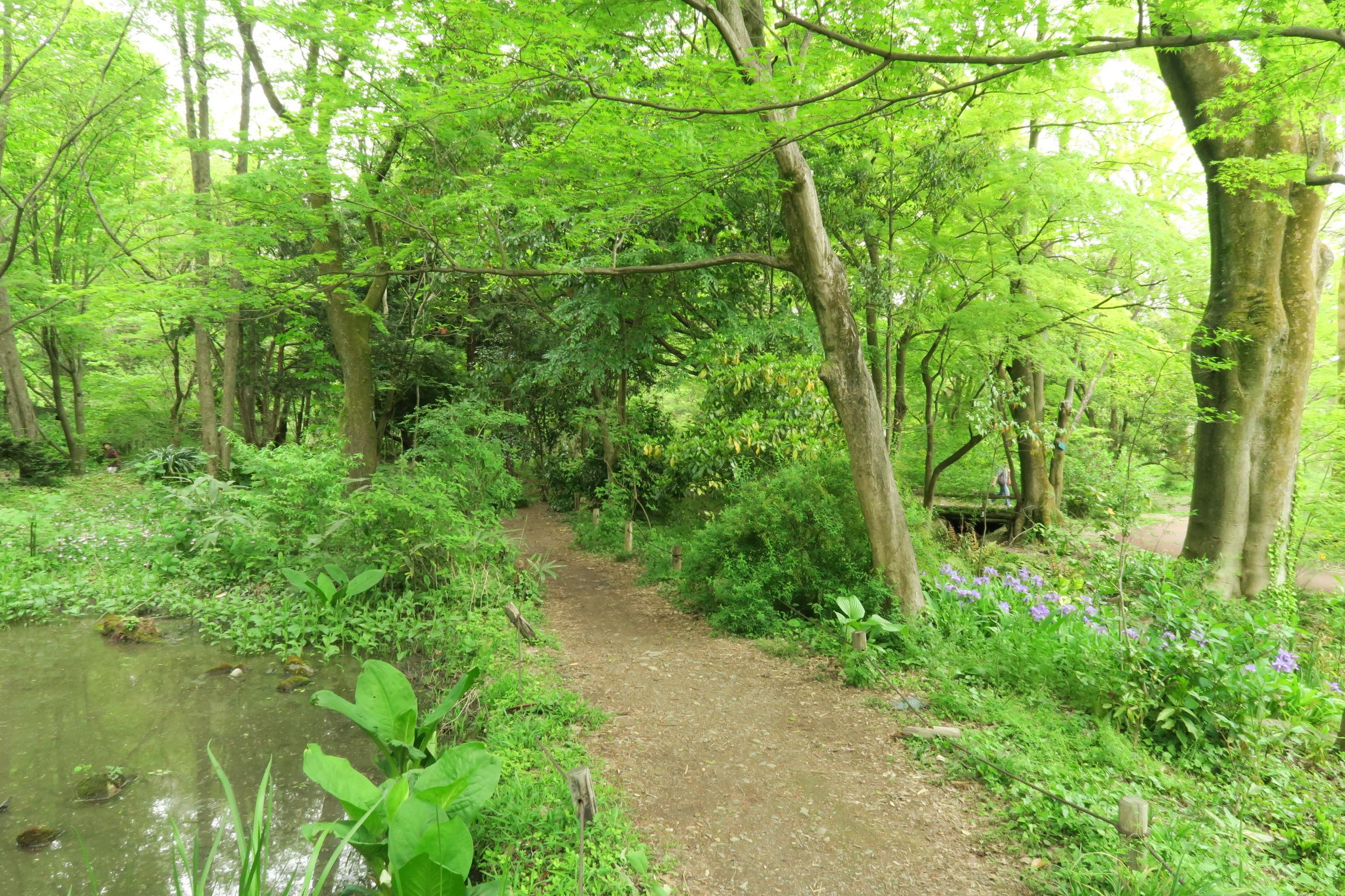 生態園の中の遊歩道。山の中にいるみたいです。