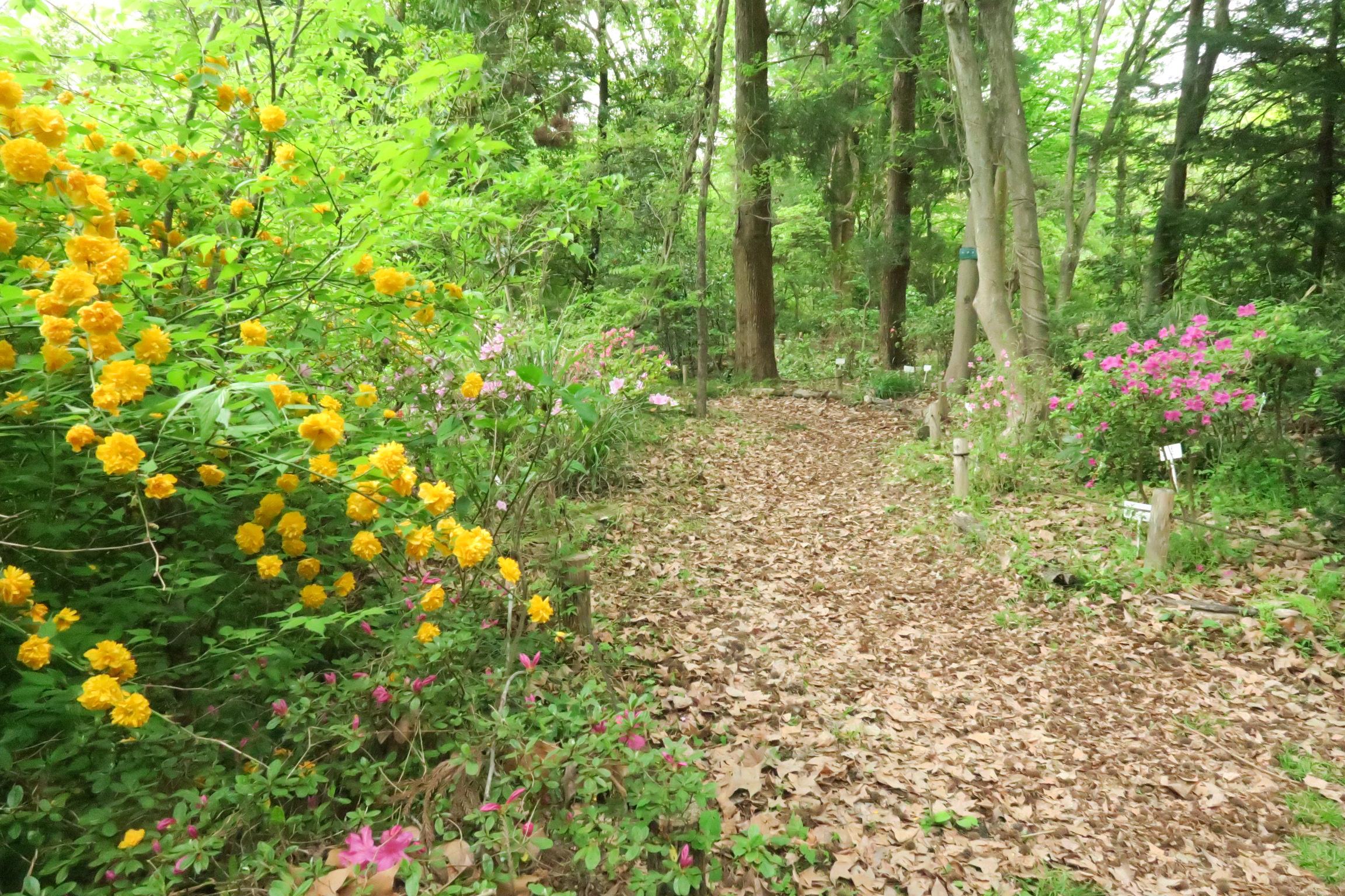 ヤマブキやツツジなど様々な花が道を彩ります。