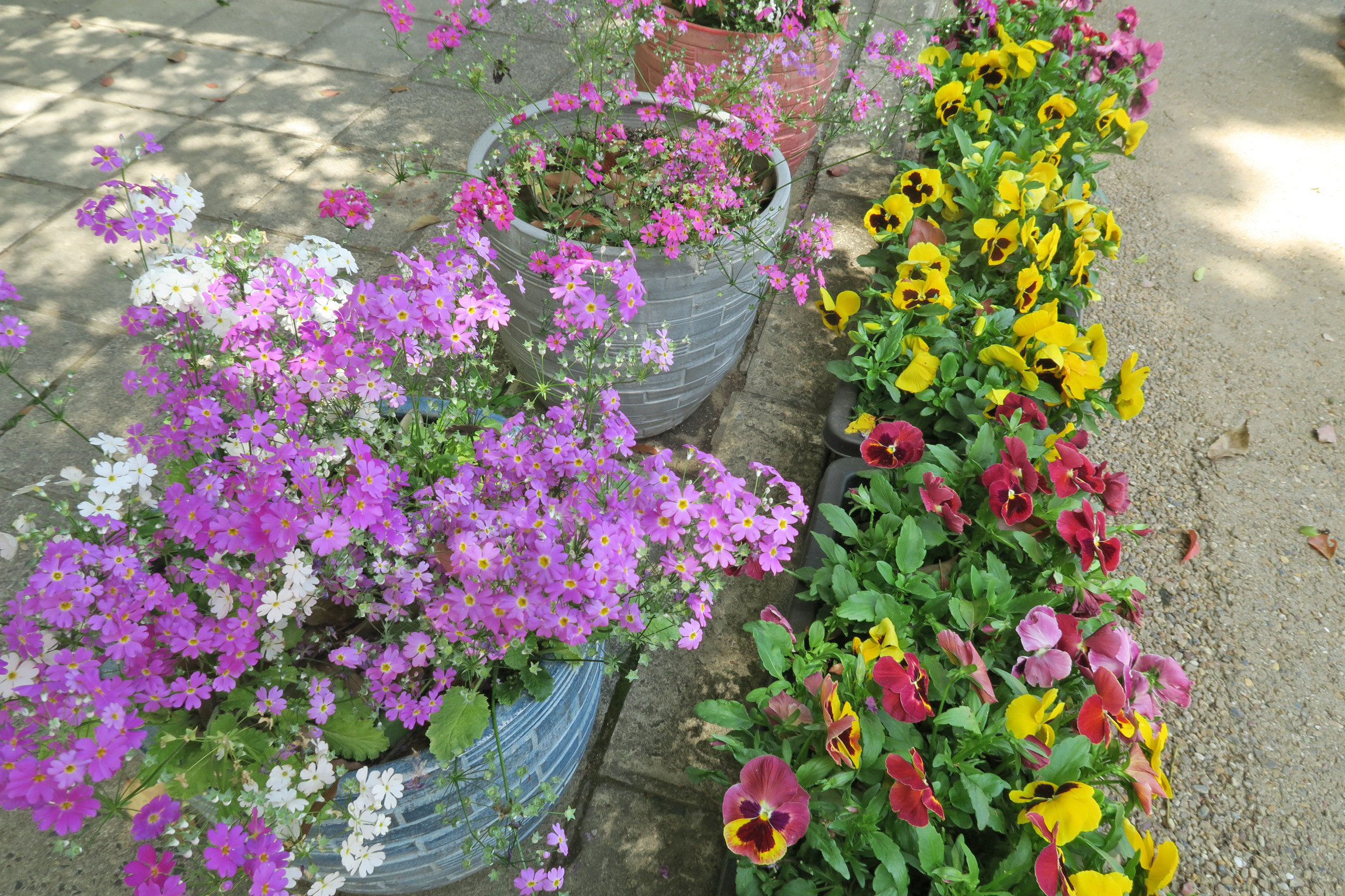 入口を入ると色鮮やかな花が出迎えてくれます。