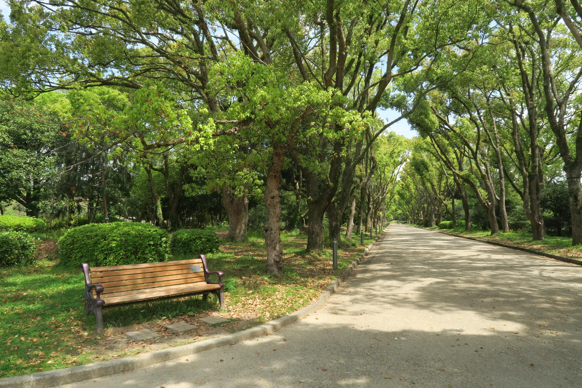 くすのき並木。開園当初に植栽されたクスノキの大木です。植物園のシンボルになっています。