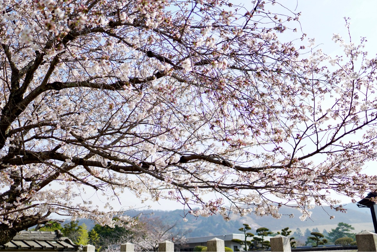 遠くに若草山が見えます。春っぽい空がとても綺麗でした。