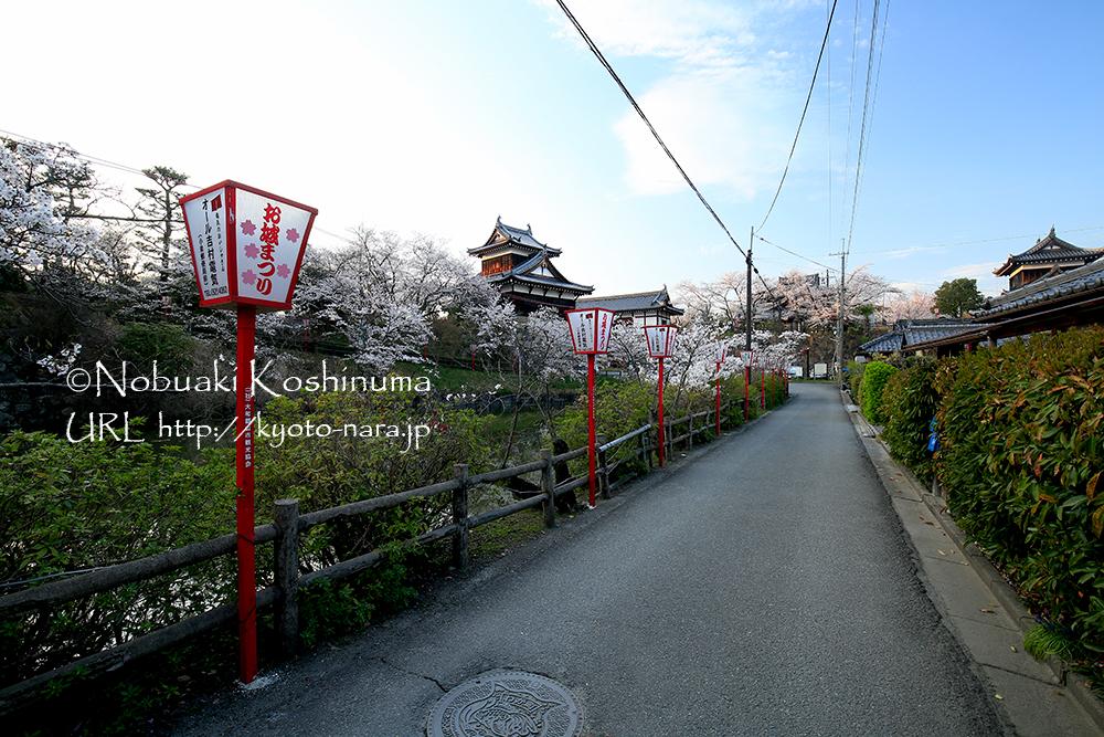 写真中央の追手向櫓(おってむかいやぐら)周辺の桜も、あと数日で満開となりそうです。