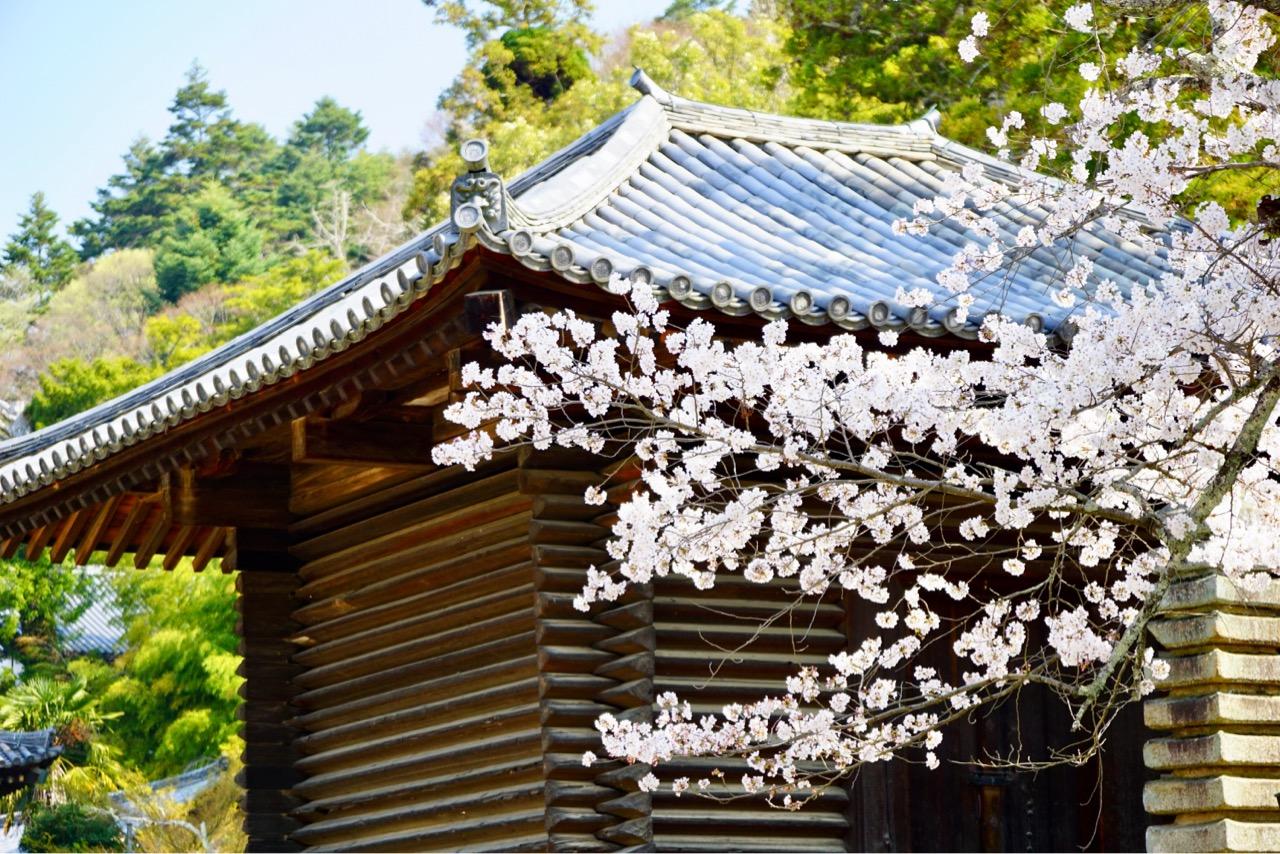 経庫 木造の建物には桜がとっても似合いますね。