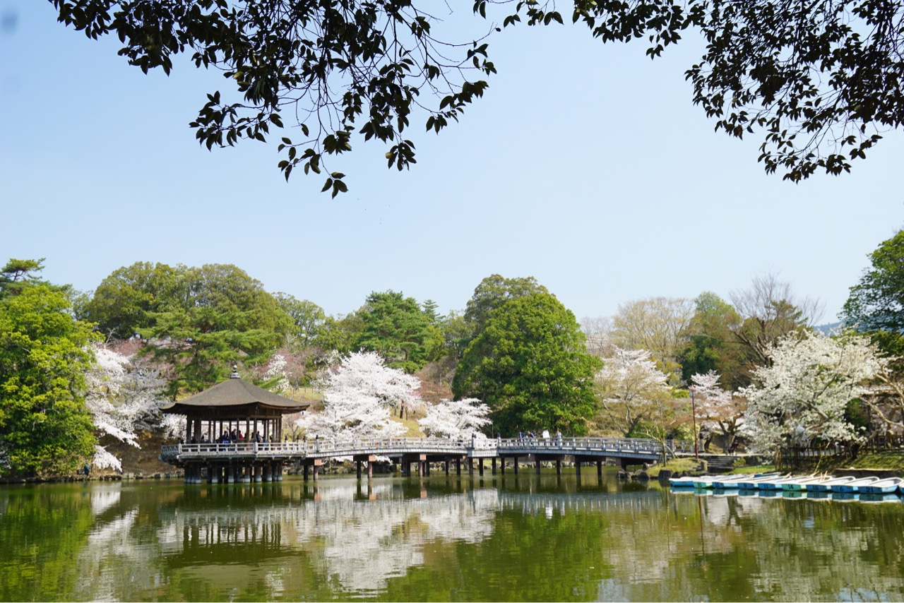 水面に桜が写って綺麗でした。