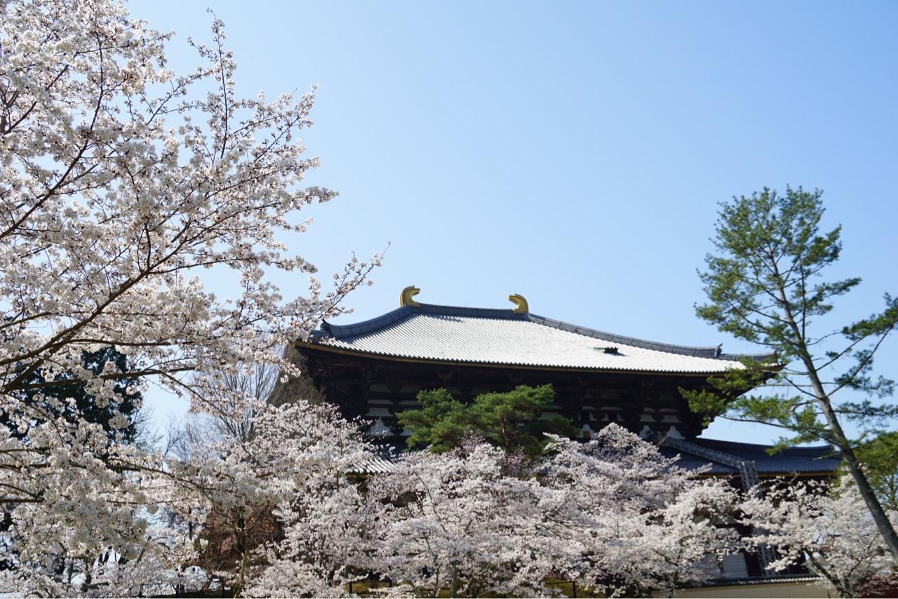 新緑の季節も素晴らしいですが、桜は華やかでいいですね。