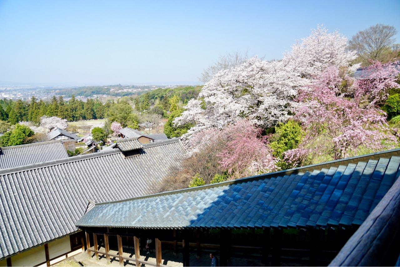 二月堂。そばにたくさんの桜が。濃淡があって素晴らしかったです。