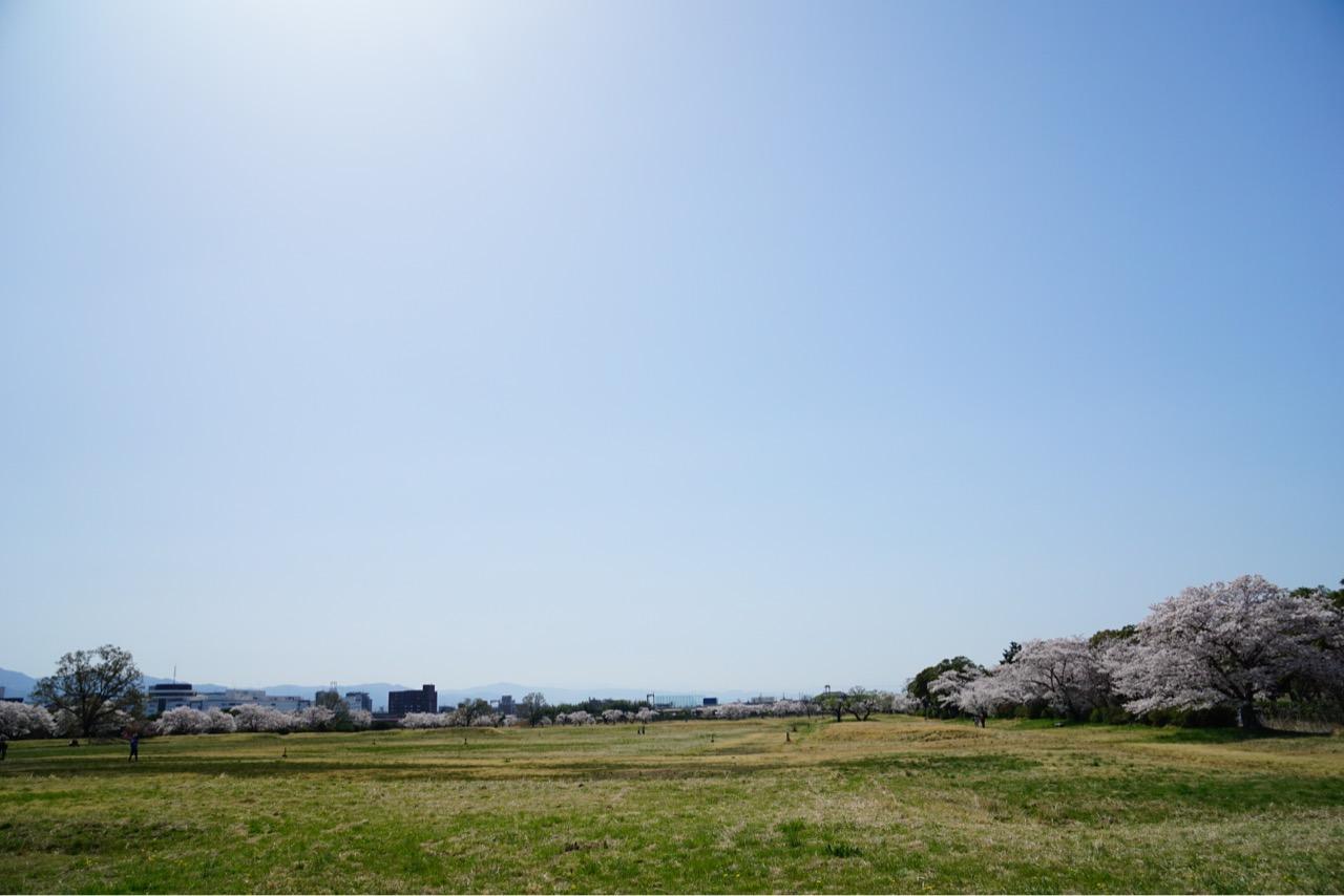 第二大極殿は広い原っぱです。周りの桜がとても綺麗です。