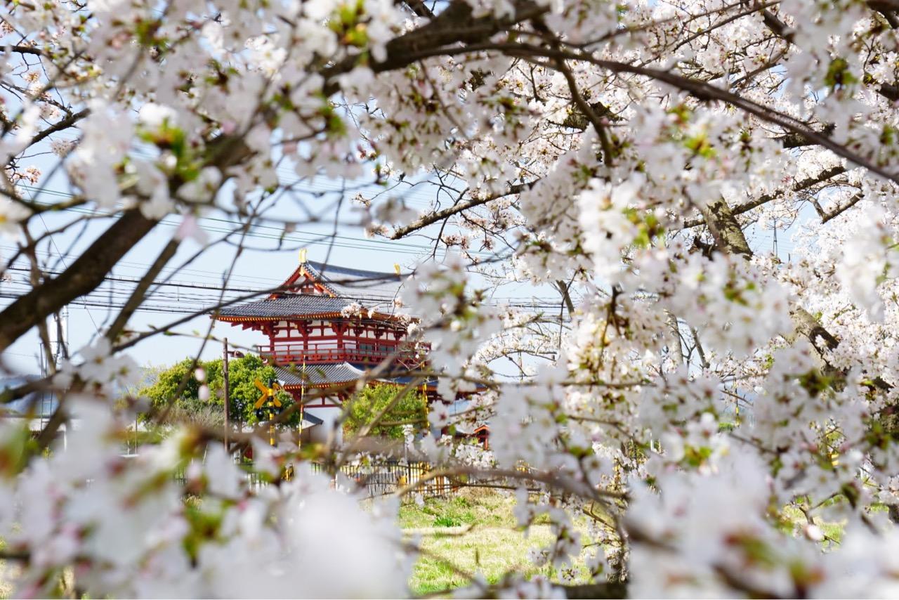 とても広い空間をぐるっと桜が取り囲んでいてとても素晴らしいです!