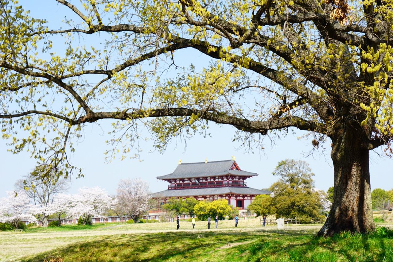 大極殿と桜がとても綺麗です。