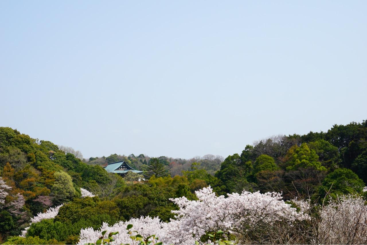 橋を渡った信貴山ホテル側からの眺め。本堂が見えます。桜が綺麗ですね。